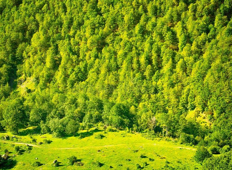 Naturbakgrund med grönt skoglandskap royaltyfria foton