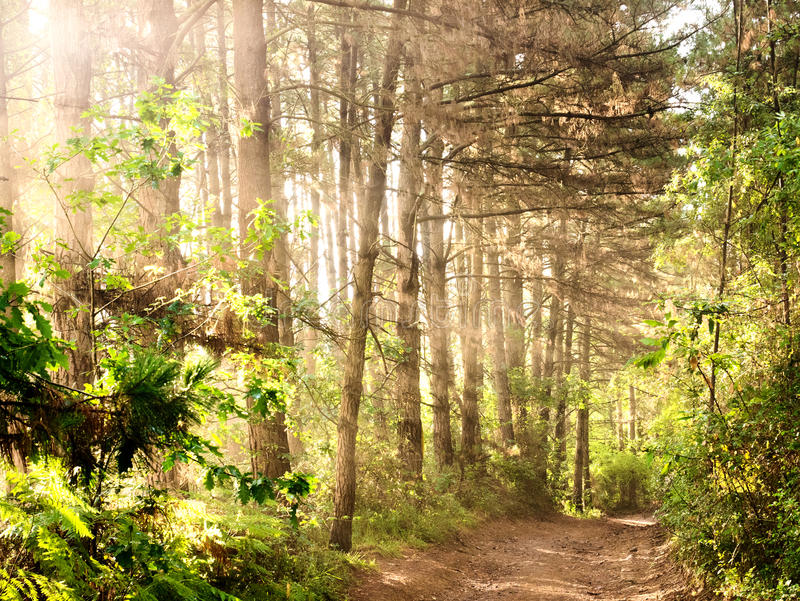 Naturbakgrund med landskap för skogväg royaltyfria bilder