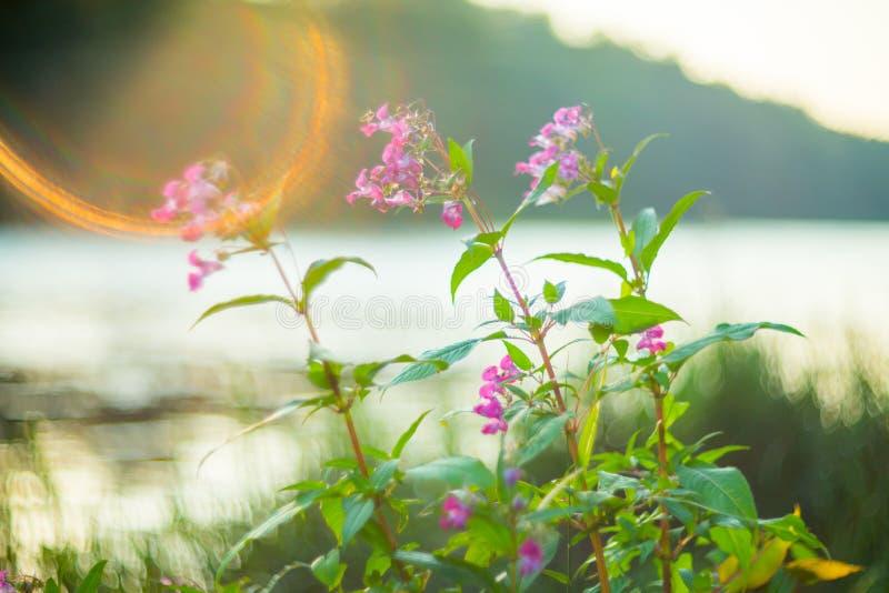Naturbakgrundsblommor och sjö royaltyfri foto