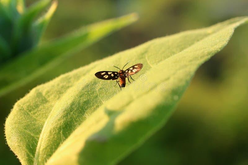 Naturbakgrundsfj?ril Fj?rilskryp i natur Liten fjäril för naturkryp på den stora gröna sidaväxten royaltyfria bilder