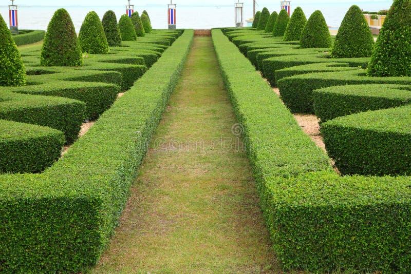 Naturbana igenom royaltyfria bilder