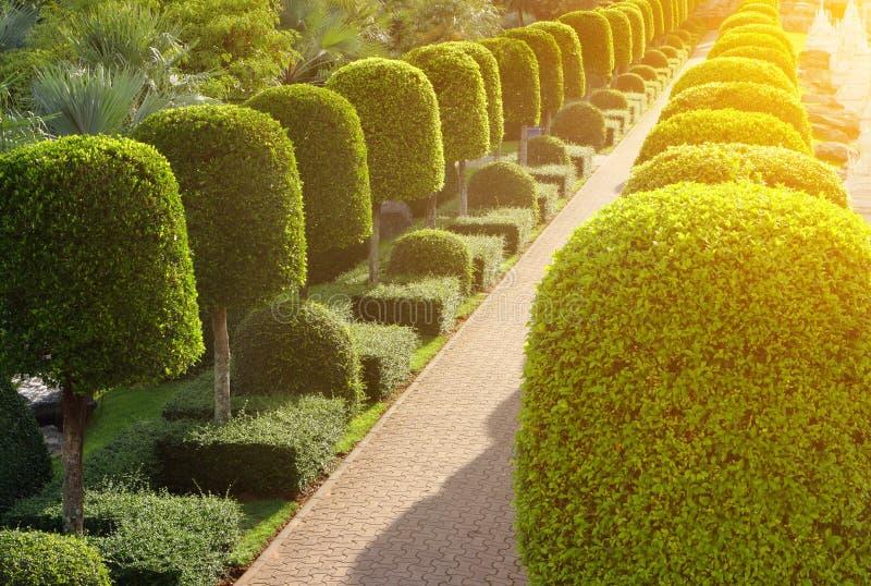 Naturbana igenom i den tropiska trädgården royaltyfri foto