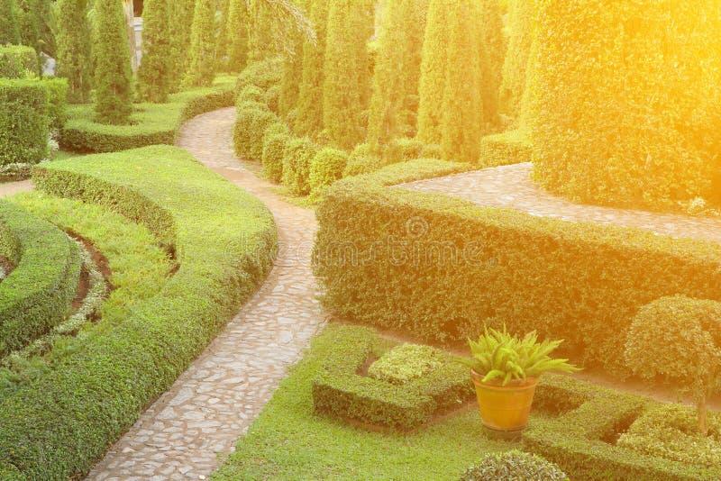 Naturbana igenom i den tropiska trädgården royaltyfri fotografi