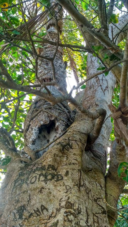 Naturbaumnachmittag lizenzfreie stockfotos