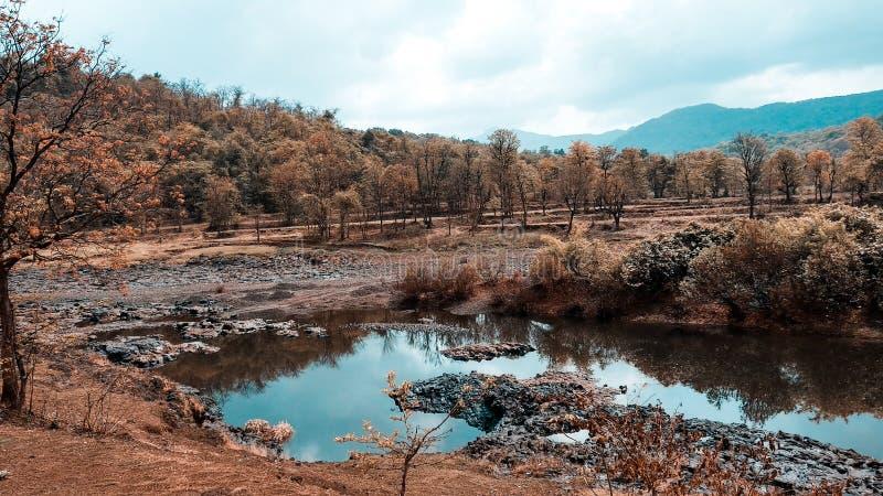 Naturbild mit kleinem waterbody lizenzfreies stockfoto