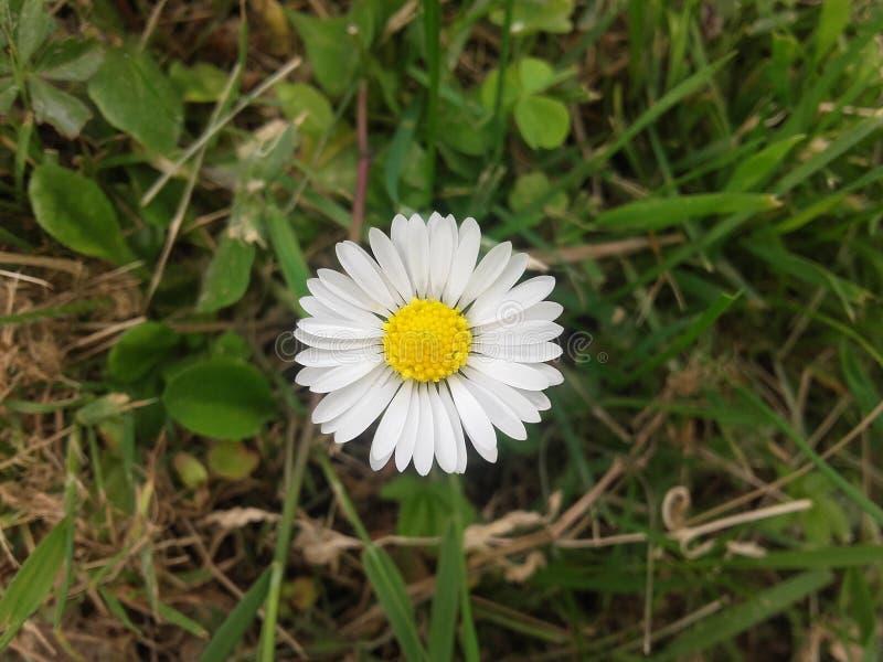 Naturblume lizenzfreie stockfotos