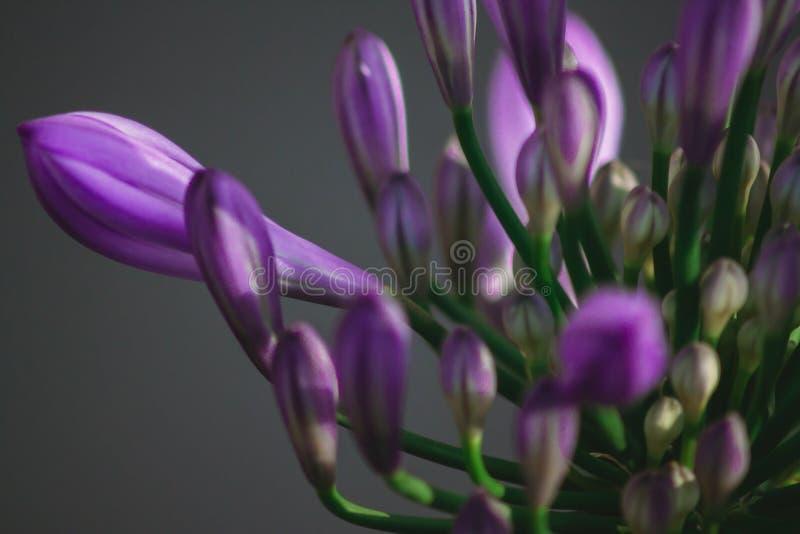 Naturblumen stockbilder