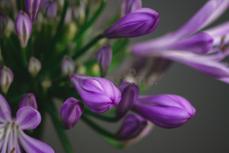Naturblumen stockbild
