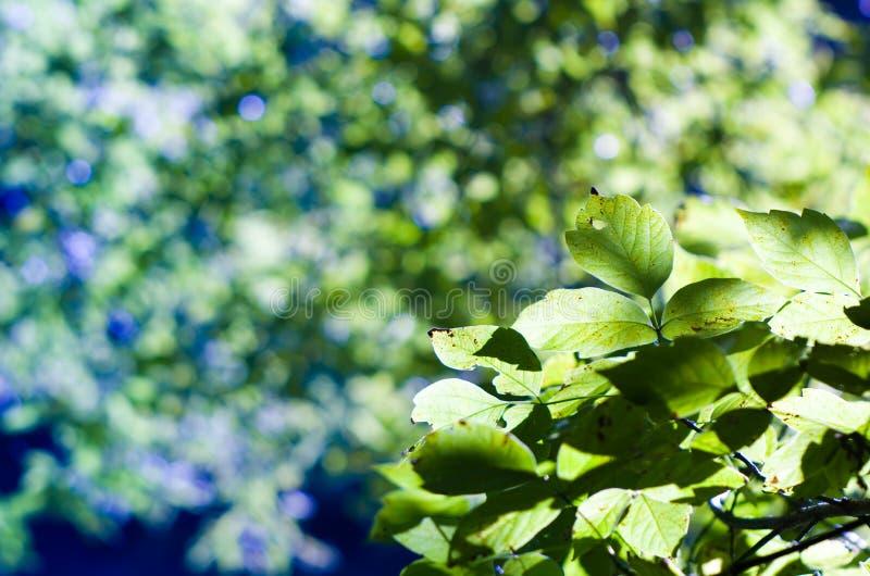 Naturbokeh royaltyfria foton
