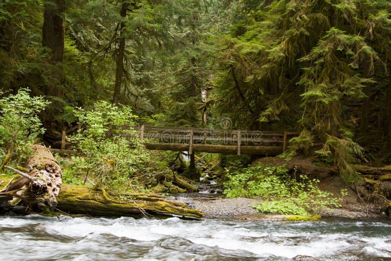Naturbro nära Marymere nedgångar, olympisk nationalpark royaltyfri bild
