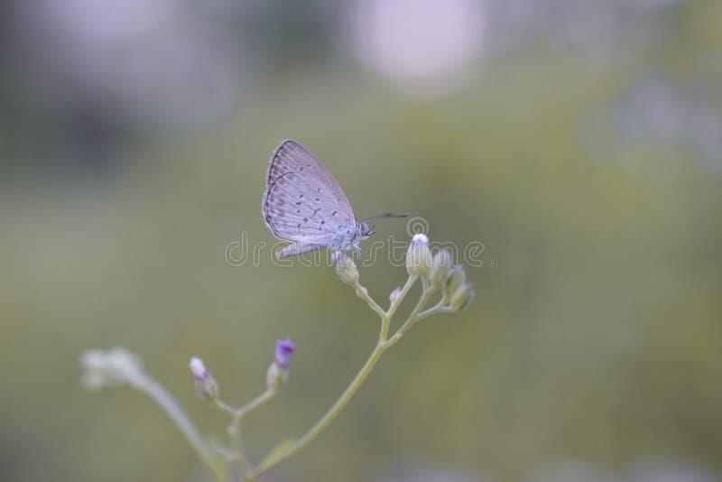 Naturcloseupfjäril på blomman fotografering för bildbyråer