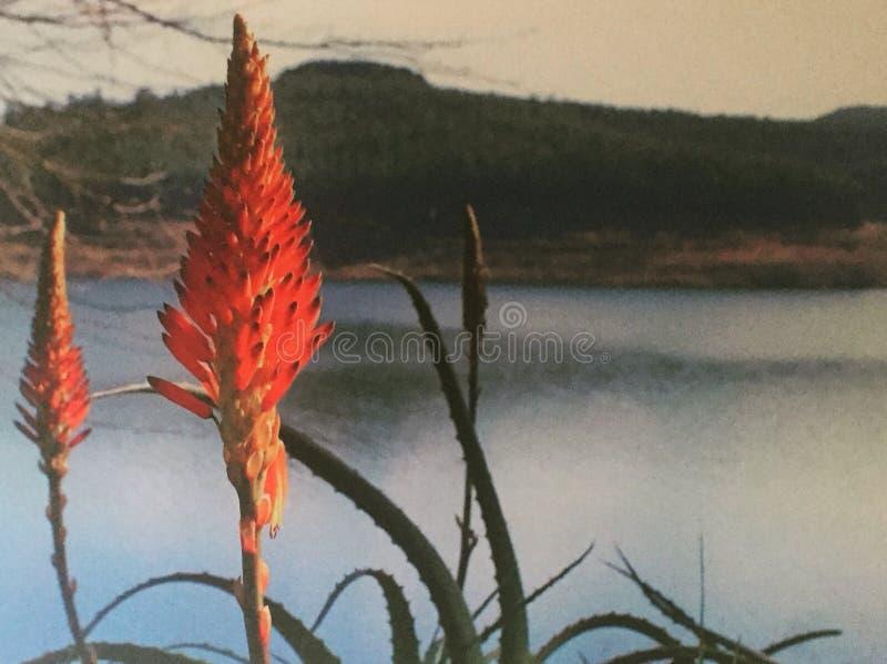 Nature's piękno zdjęcia royalty free
