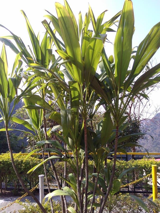 Nature1 στοκ φωτογραφία με δικαίωμα ελεύθερης χρήσης
