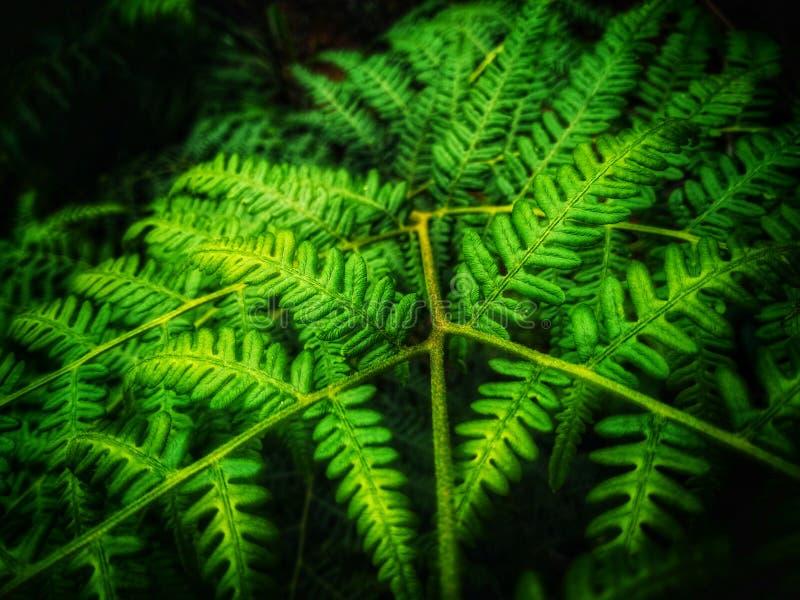 Nature& x27 ομορφιά του s στον πράσινο τρόπο στοκ φωτογραφία με δικαίωμα ελεύθερης χρήσης