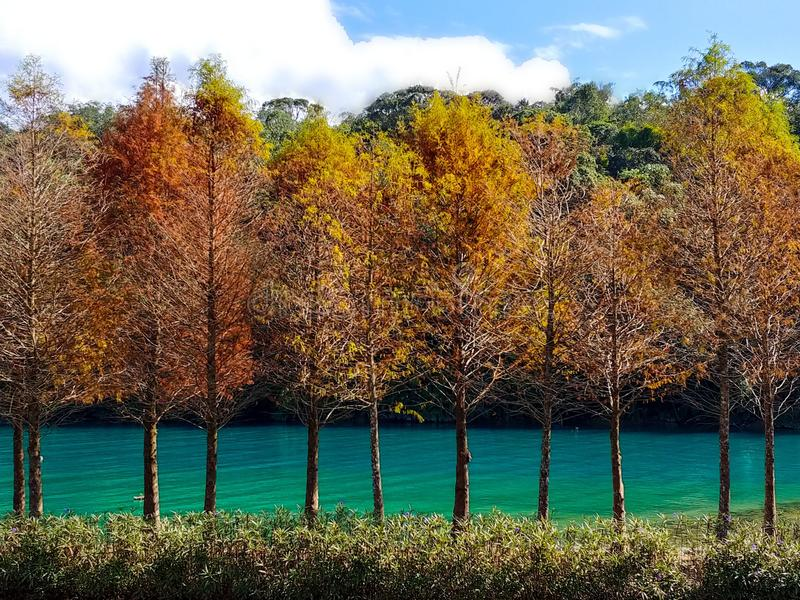 Nature' цветовая гамма s стоковое фото