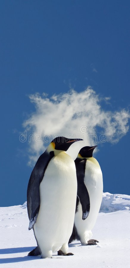 Nature. Amazing Nature Penguins in Antarctica