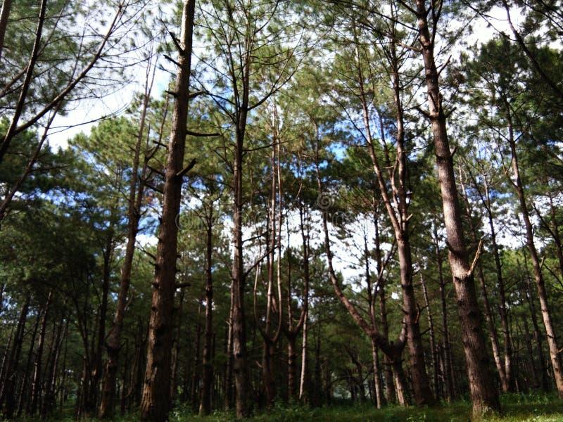 Nature101 στοκ εικόνα