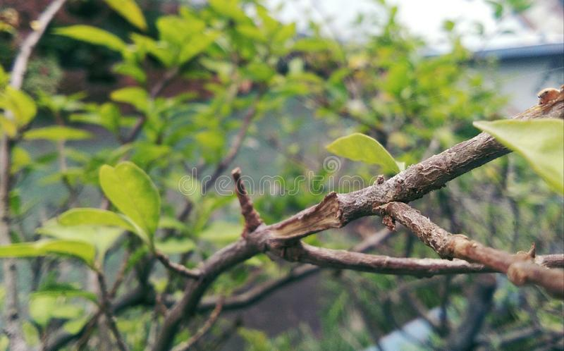 nature images stock