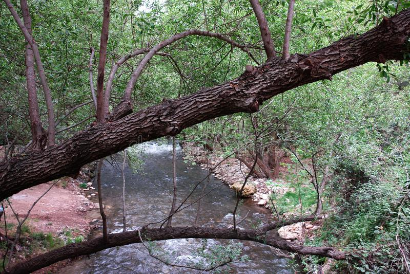 Nature16 图库摄影
