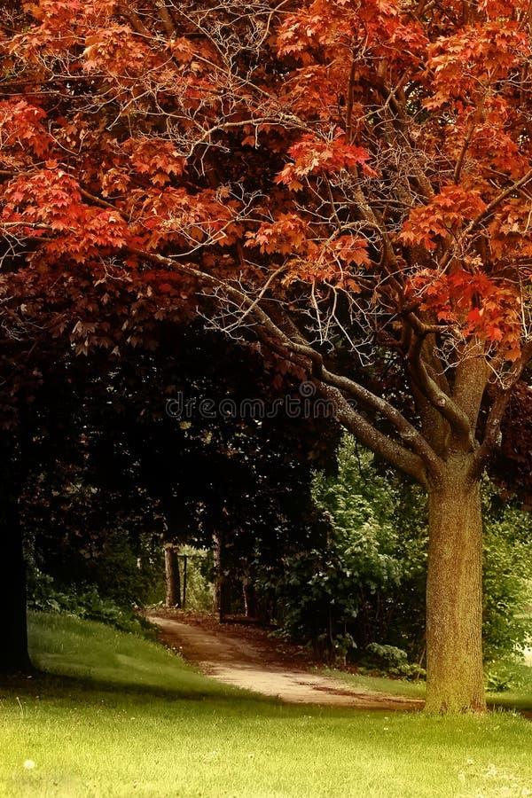 Nature (25) photo libre de droits