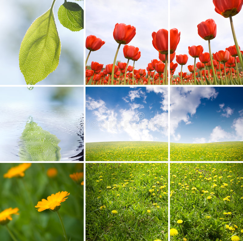 Nature royalty free stock images