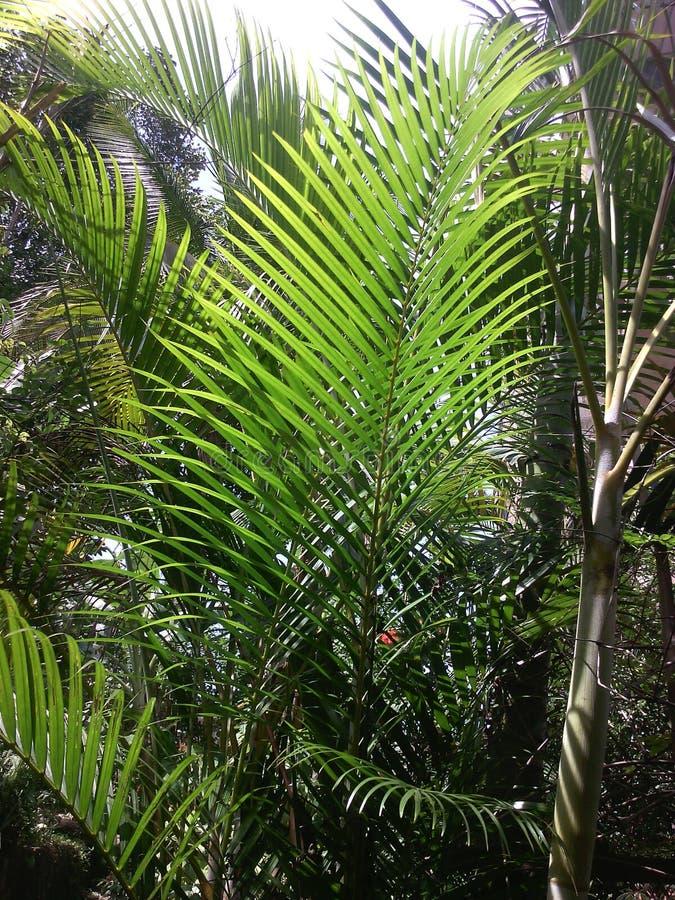nature image stock