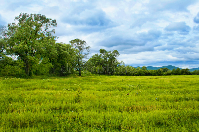 bright juicy grass the sky and clouds stock images