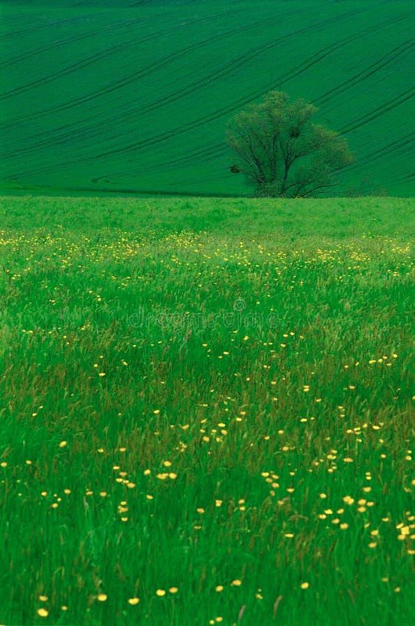 Nature photographie stock libre de droits