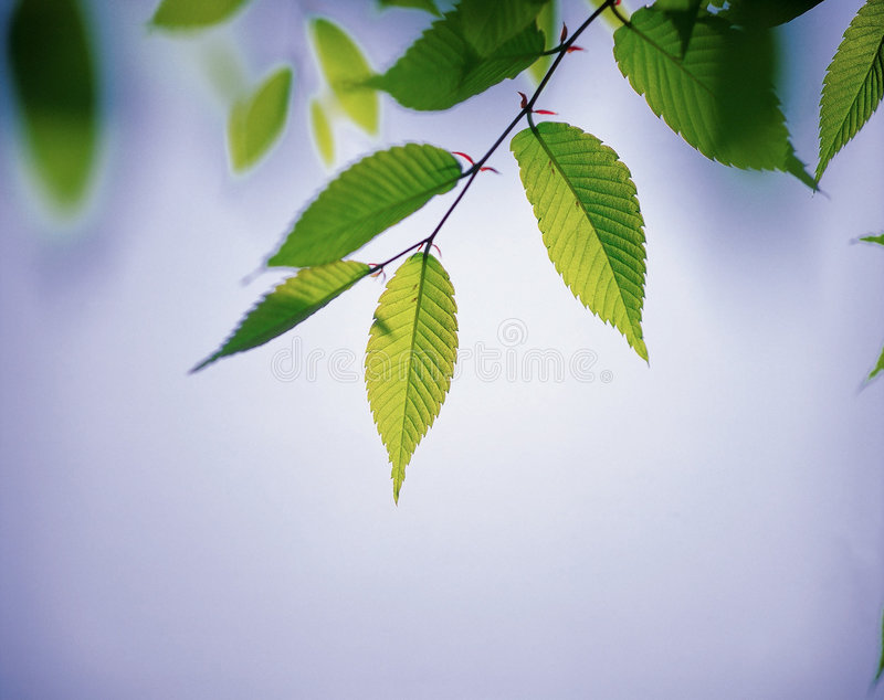 Download Nature stock image. Image of scenery, leaves, nature, outdoors - 765873