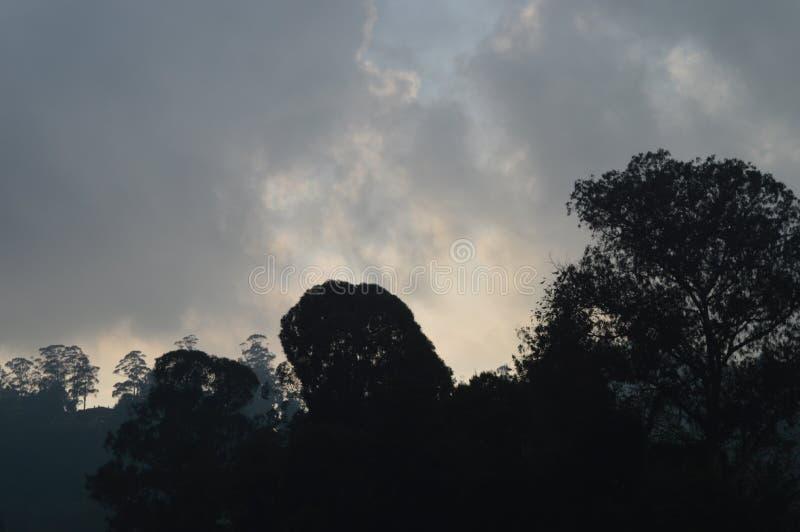 nature photos libres de droits