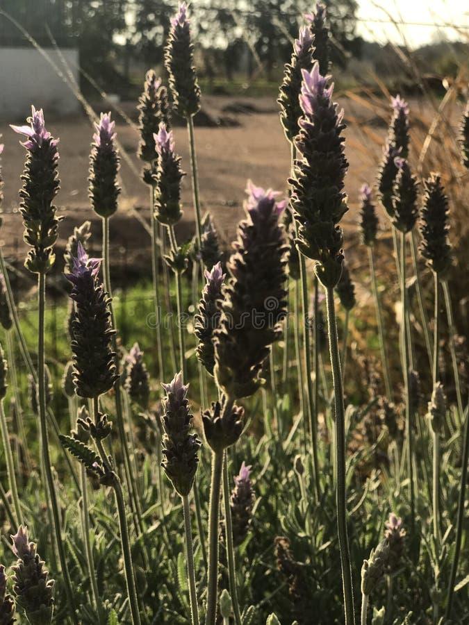 nature photographie stock