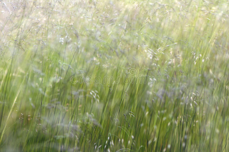 Nature abstract royalty free stock images