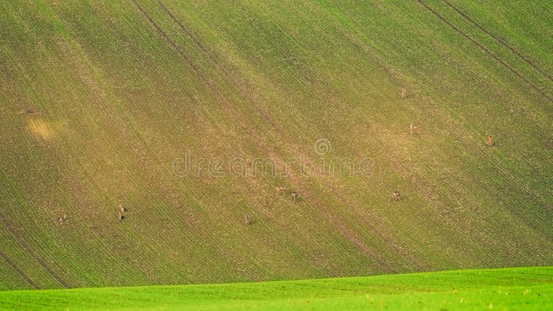 Nature abstract background of agricultural field, natural texture for your design stock photos