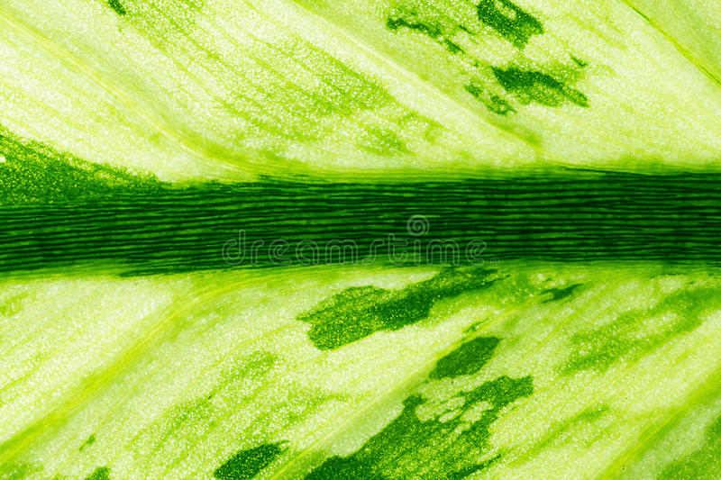 Nature Abstract Background royalty free stock image