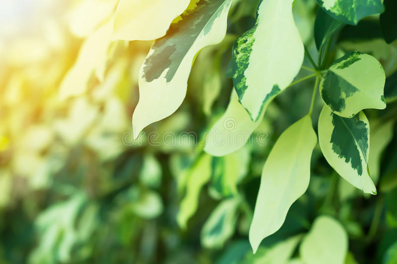 Nature Abstract Background and Sunlight. Nature abstract background, green leaf with sunlight, ecology concept royalty free stock images