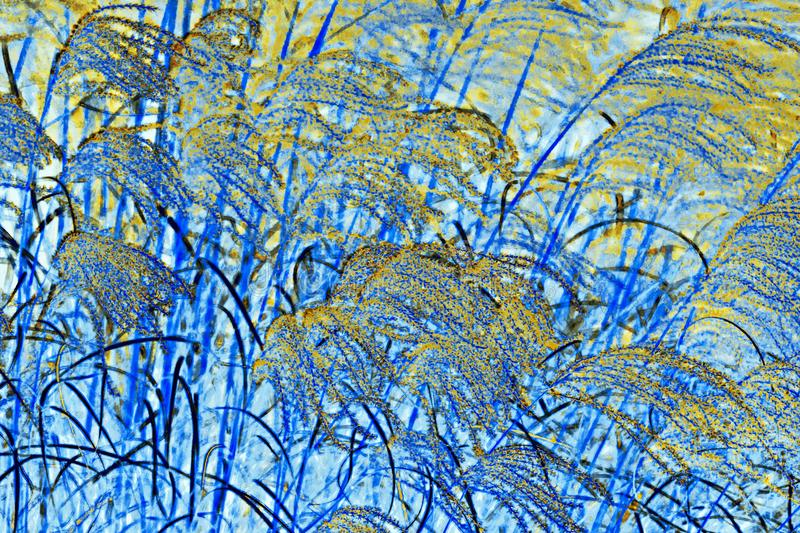 NATURE ABSTRACT- PAMPAS GRASS BLOWING IN WIND royalty free stock photos