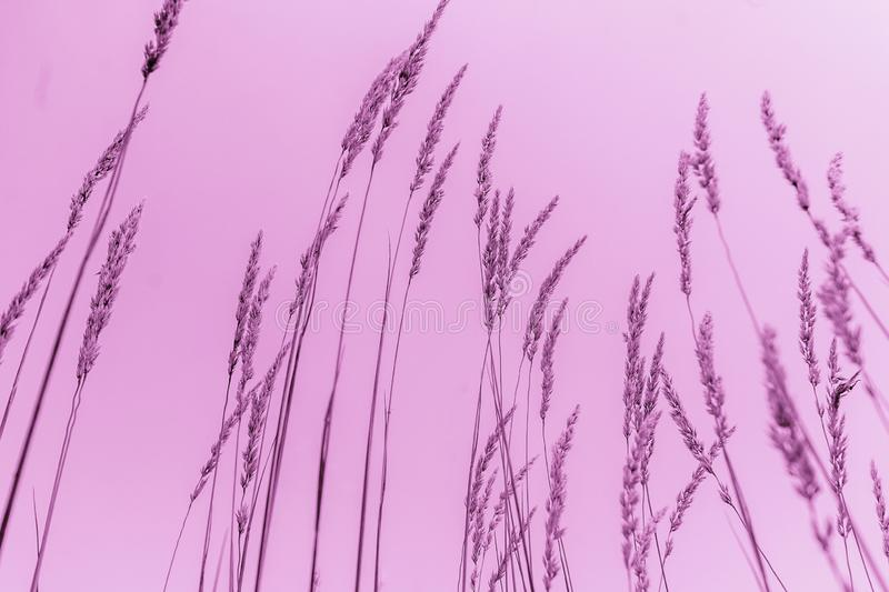 Nature abstract picture. Abstract purple picture of grass stock photography