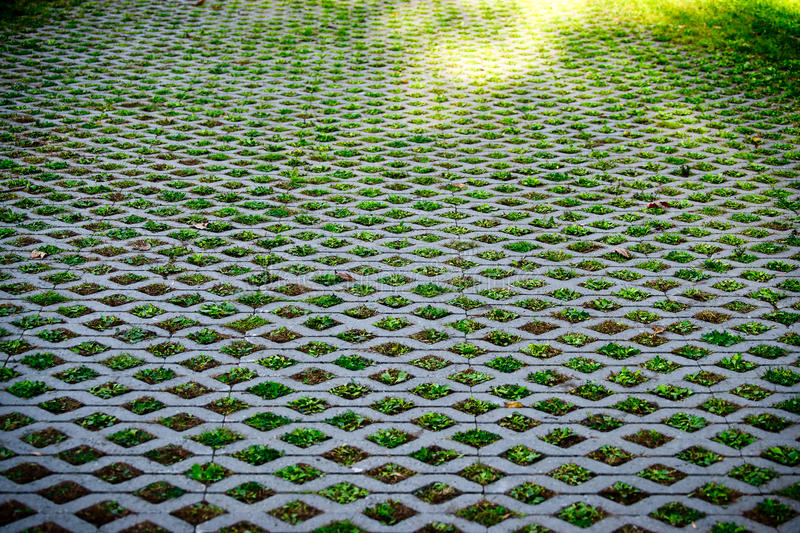 Download Nature Abstract Small Plants In Grid Pattern Stock Photo - Image: 21546118