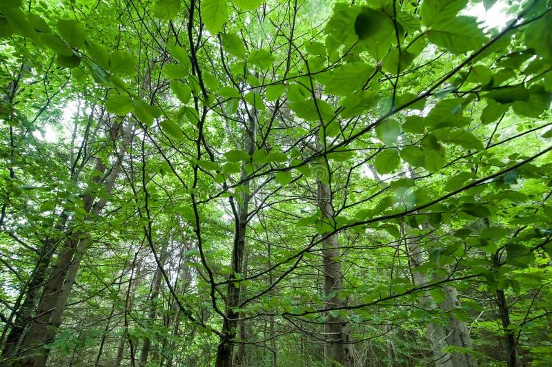 Nature abstraite Feuilles fraîches dans la forêt d'été photographie stock libre de droits