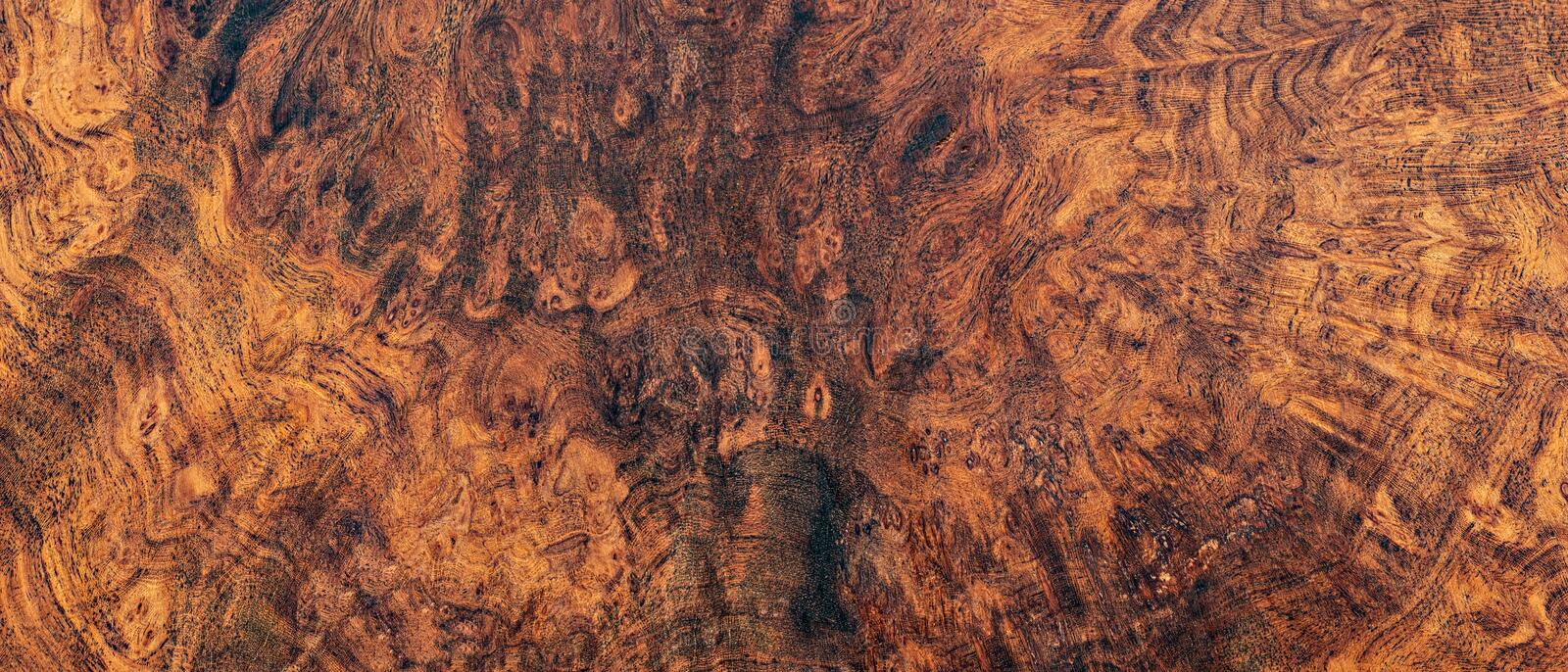 Nature afzelia burl wood stock photos