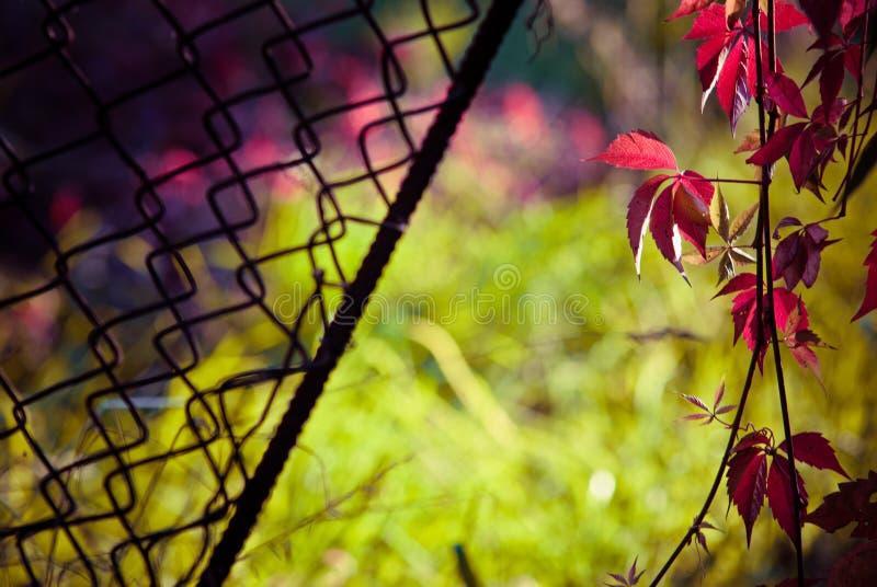 Nature allant de la prison photo libre de droits