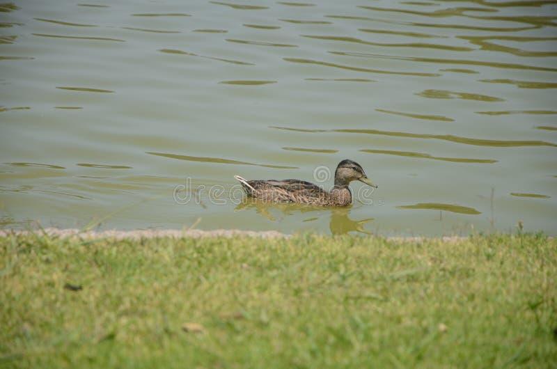 Nature-animal royalty free stock photography