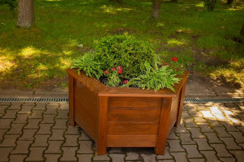 Wooden flower bed with flowers in a city park stock photography