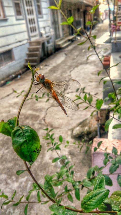 Nature apr?s pluie photographie stock