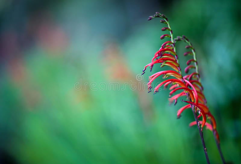 Nature art royalty free stock photo