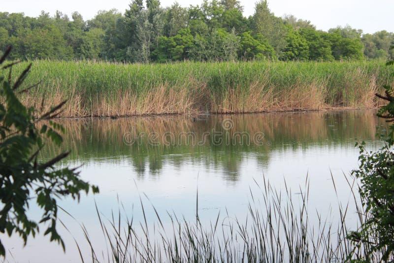 Nature as it is. Khortytsya Island.Dnepr River stock image