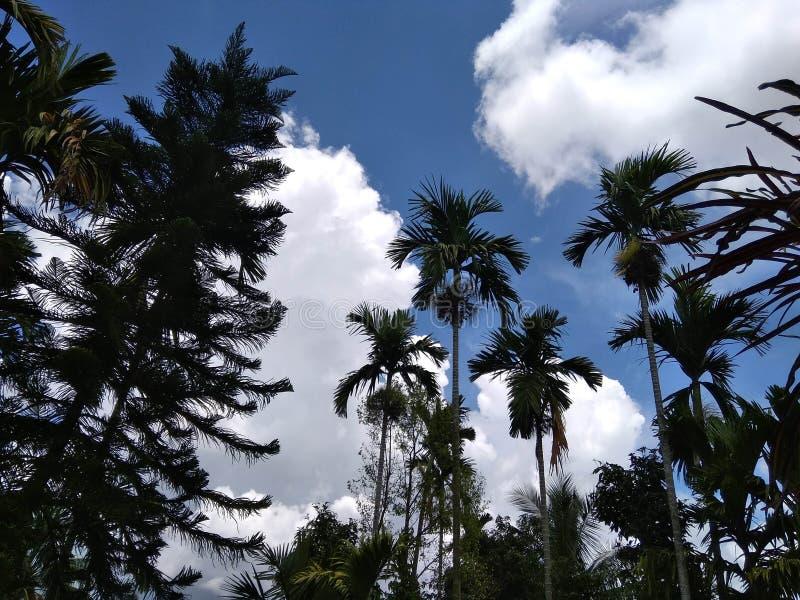 Nature Assam photos stock