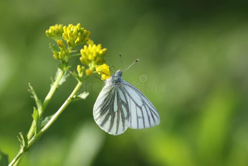 Nature au printemps images libres de droits