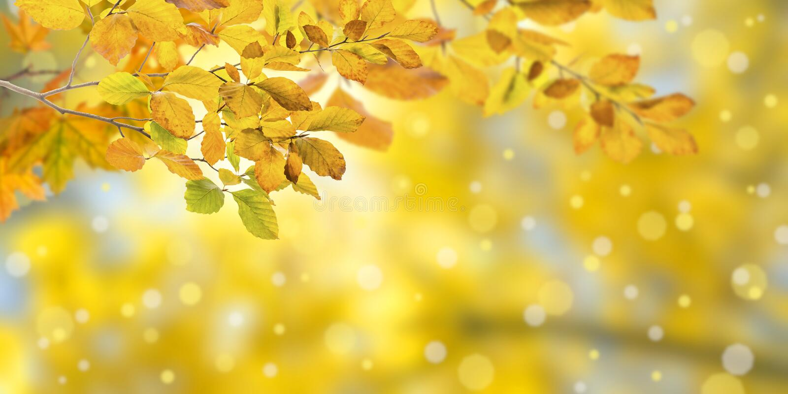 Nature autumn background. With golden foliage royalty free stock photo