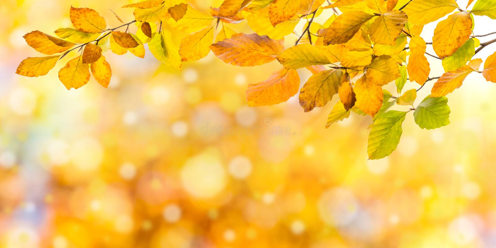 Nature autumn background. With golden foliage stock image